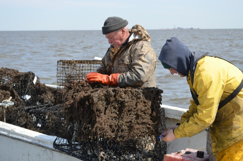 Two people load derelict crab pots onto a boat.