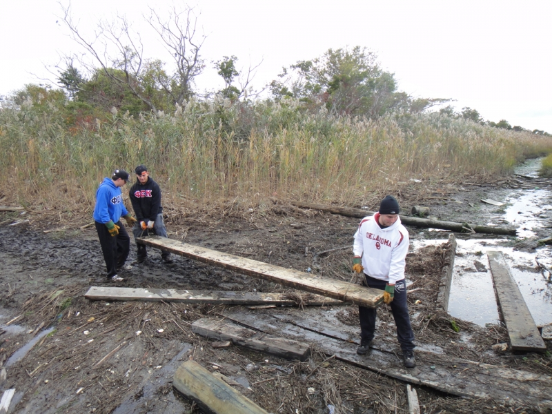 Volunteers caring lumber through a marsh.