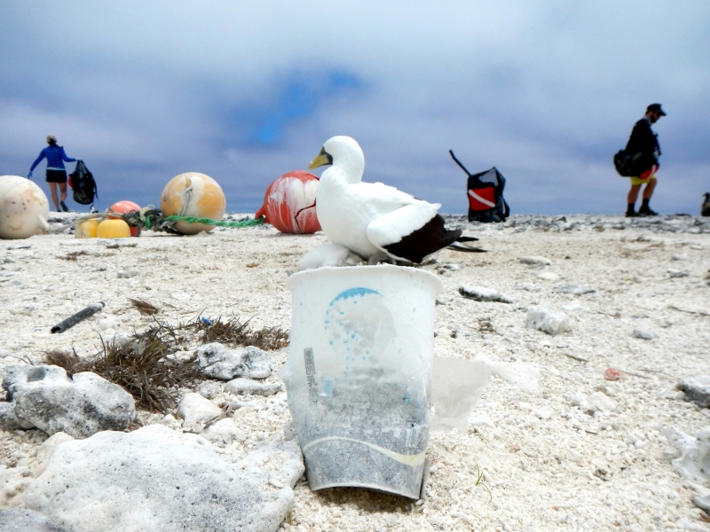 Bird on beach surrounded by plastic trash.