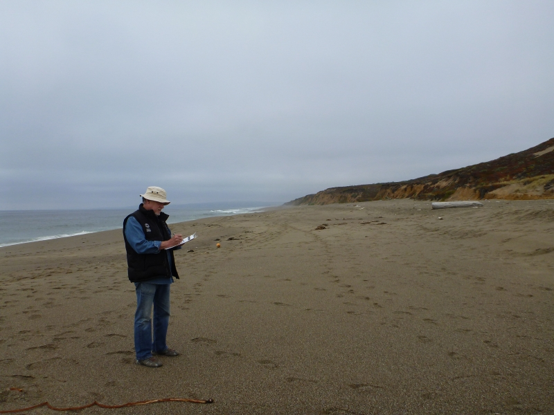 Man stands on a beach recording information on a clipboard.