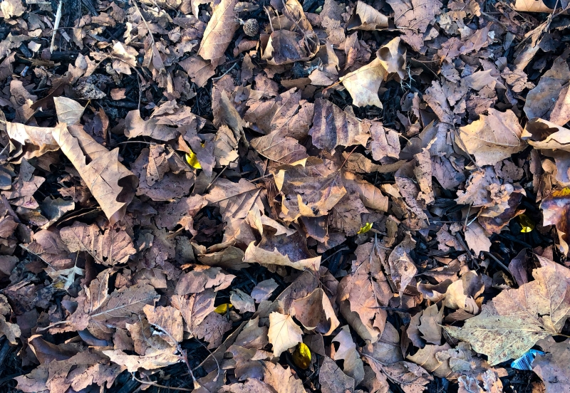 A pile of leaves.