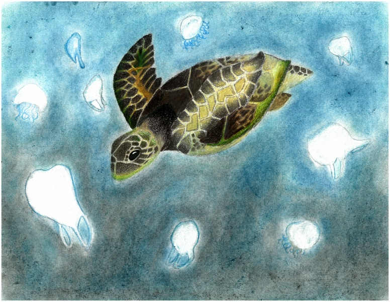 Artwork of a sea turtle.