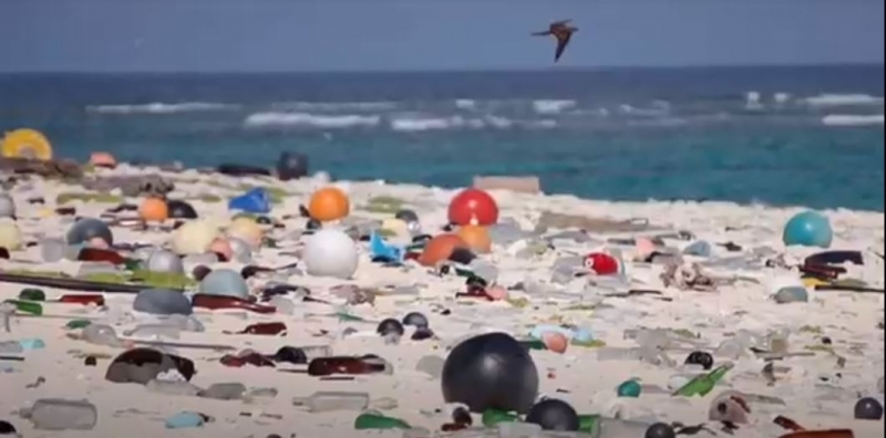 A beach littered with marine debris.