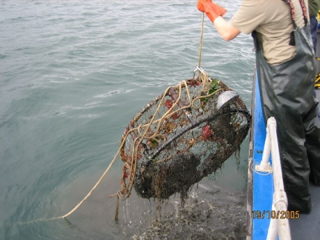 A person pulls a round crab pot up, out of the water.