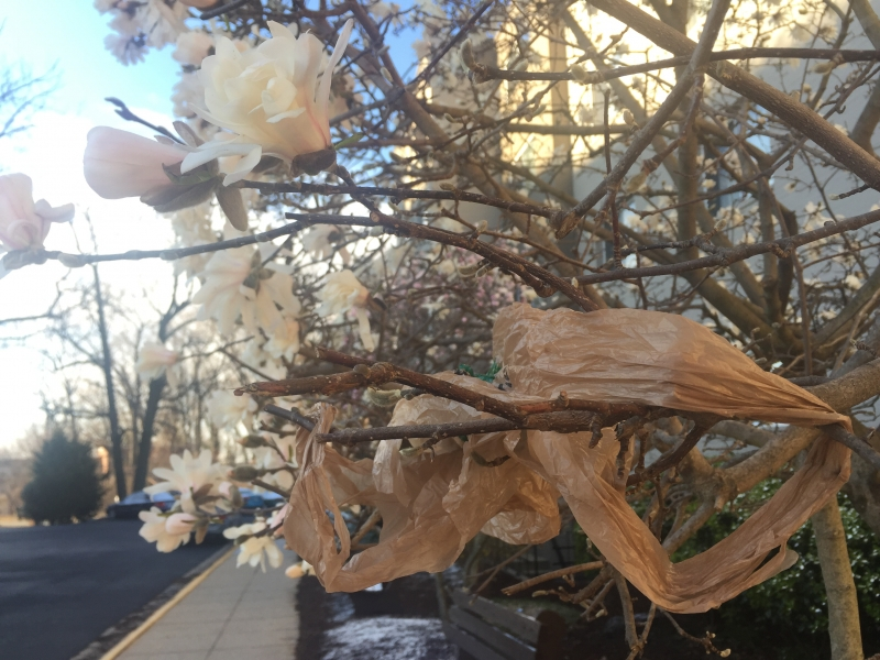 A plastic bag stuck in a flowering tree.