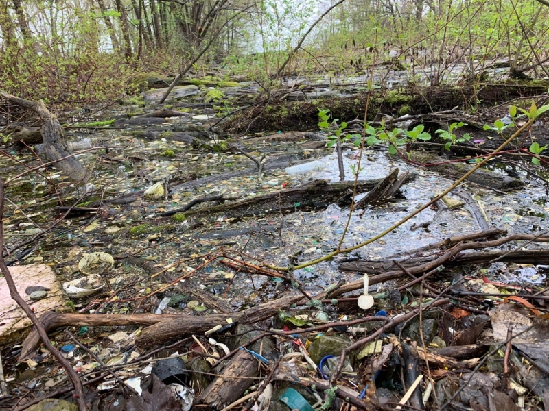 Several sticks and small logs float in a pool of water sprinkled with marine debris.