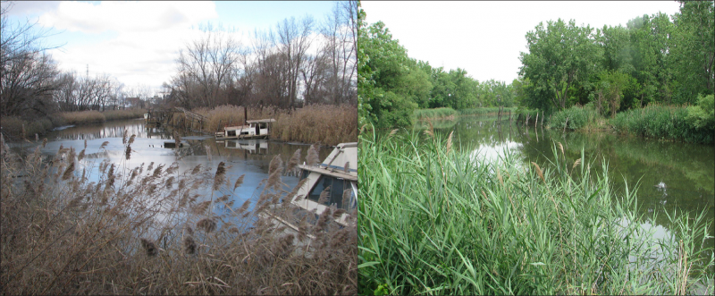 A river and shore with abandoned and derelict vessels, and then the same site with no derelict vessels.