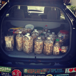 Bags of collected cigarette butts.