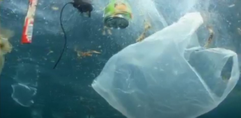 A plastic shopping bag floats underwater.