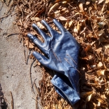 Rubber (latex) glove found on the street in Silver Spring, Maryland.