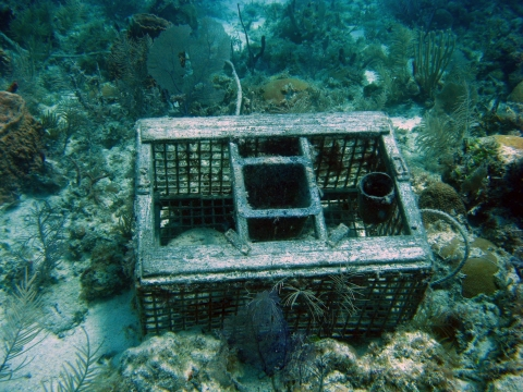 A derelict trap in the Florida Keys.