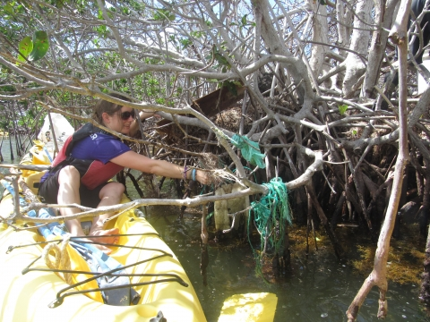 A woman in a kayak reaching for debris on a mangrove tree.