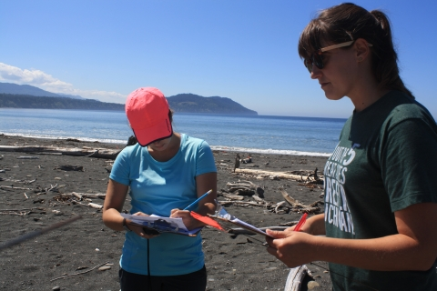 Surveyors record GPS locations on an MDMAP datasheet during a shoreline survey on a beach.