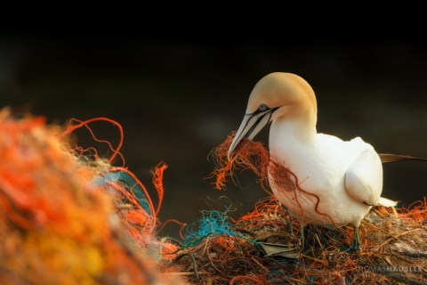 A bird holds pieces of net in its beak and is surrounded by a larger net.