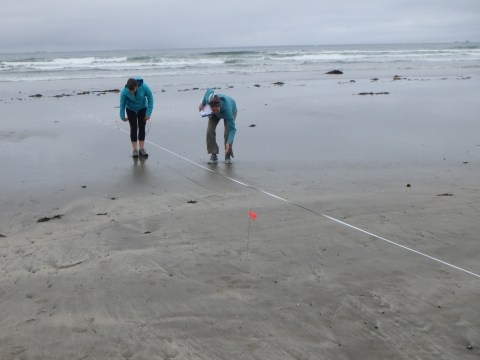 Two people on the beach measuring distance.