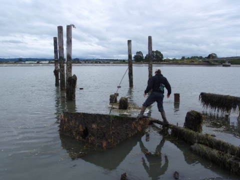 A person walking on and examining marine railways and pilings slated for removal.
