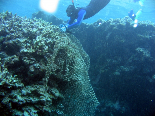 A net caught on a large coral with a snorkler working to remove it.