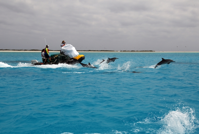 The Marine Debris team being escorted by spinner dolphins as they transport debris from Eastern Island to Sand Island.