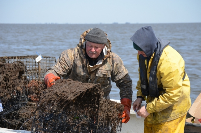 Fishers help pull up derelict crab pots.