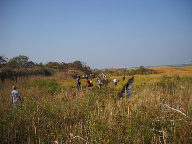 A view of the marsh with many volunteers in it.