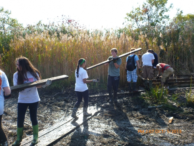 Volunteers carrying lumber through a marsh.