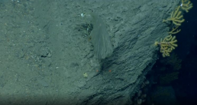 A picture of a clear, plastic object wrapped around dead coral that area located deep in the ocean.