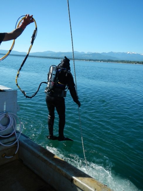 A scuba diver leaps off the side of the boat into the water.