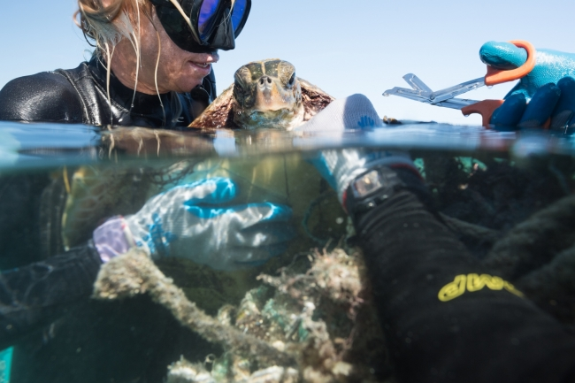 Two divers work to free a sea turtle from entangled marine debris.