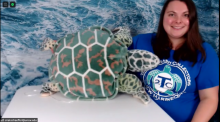 A person sits in a chair and supports a stuffed animal in the shape of a sea turtle on a table.
