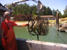 A person stands on a boat holding an old, round crab pot that was collected from the sea.