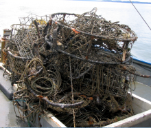 Derelict crab pots removed from the Puget Sound.