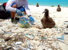 Disentangling an albatross chick from marine debris. (Photo Credit: NOAA)