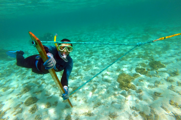 A marine debris diver conducts an in-water tow-board survey for marine debris.